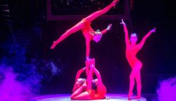 Online cirkusz - Októberben indul a Fővárosi Nagycirkusz élő közvetítése